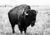 Rocky Mountain Arsenal-9164.jpg (rickoshea17) Tags: rma buffalo bald park eagle arsenal deer rockymountain