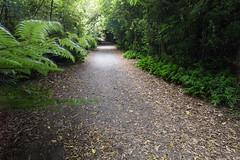 IMG_6436.jpg (Brendon & Keryn) Tags: zealandia summer newzealand northisland wellington