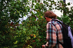 (The Integer Club) Tags: film 35mm yashicaelectro35gt 2016 london uk summer foraging berries blackberries brambles