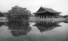 Gyeonghoeru Pavilion (hardaker) Tags: gyeongbokgung kr seoul architecture asea blackandwhite gray high historical history korea monochrome palace pillars pool reflection temple tree unknownday tofb