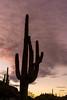 Saguaro National Park (fred h) Tags: sagauro122920166854 saguaronationalpark fred holley