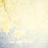2016 Fall Yokohama Kishine Park (MIKINOBU) Tags: 120 120mmfilm 2016 6x6 bokeh carlzeissplanar80mmf28 color dof digitalduplication fall film hasselblad japan kanagawa nature snapshot tree yokohama