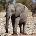 DSC09711 - NAMIBIA 2013