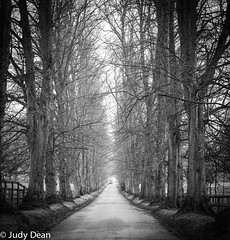 Tree lined road (judy dean) Tags: judydean 2017 sonya6000 cotswolds batsford trees road lane blackandwhite