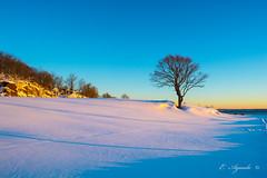 Tree in winter (E. Aguedo) Tags: warwick winter snow tree dormancy light sunrise sky ocean rocky point park rhode island new england ngc