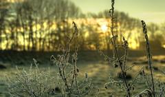 Crystalline deposit of frozen water vapor. (Alex-de-Haas) Tags: 50mm d5 dutch hdr january nederland nederlands netherlands nikkor nikkor50mm nikon nikond5 noordholland thenetherlands warmenhuizen westfrieseomringdijk bevroren cityofwarmenhuizen cold daglicht daylight frozen gevroren handheld highdynamicrange icy januari koud landscape landschap licht light overdag polder polderlandschap sun sunray sunrays sunbeams sunny sunrise winter zon zonnestralen zonnig zonsopgang