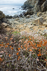 Big Sur (joshbousel) Tags: beach bigsur ca california juliapfeifferburnsstatepark northamerica ocean pacificcoast pacificocean partingtonpoint places travel unitedstates unitedstatesofamerica usa water