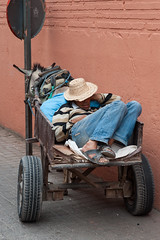 Powernap @ Marrakech (PaulHoo) Tags: sleep sleeping city urban citylife asleep candid marrakech morroco africa 2016 powernap donkey hat transport man men lazy relax streetcandid streetphotography