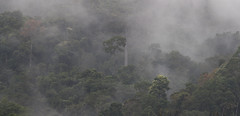 Colombia. (richard.mcmanus.) Tags: colombia southamerica elpaujil proaves rainforest trees clouds panorama mcmanus landscape