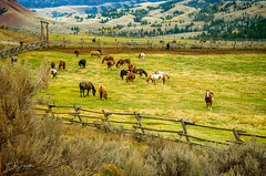 The Ole West (Bob C Images) Tags: horses ranch pasture grass fences sky clouds mountain jacksonhole wyoming travel animals
