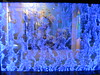 IMG_4579 (Whitebrowgigs) Tags: flowers fish animals shark turtle tiger polarbear toledozoo turtles tigers sharks polarbears orang orangutans orangs thetoledozoo