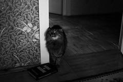 untitled (averkievamary) Tags: bw white black beauty cat canon 50mm book blackwhite model kitten sweet brest 5d belarus minsk mark2 2015 5dmark2