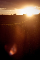 Tuniberg I (Rebel T2i (digital)) Tags: sunset vineyard sonnenuntergang freiburg weinberg 2015 tuniberg