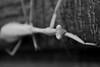 Mantis in B&W (Sarah Brigham) Tags: blackandwhite white black nature animal closeup sarah bug garden mantis insect photography grey photo natural gray brigham prayingmantis naturephotography sarahbrigham