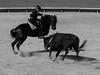 . (Elliott Fusy-Pudal) Tags: horse feria bull arena nimes corrida mastery pardon equitation horsriding pablohermosodemendoza ferminbohorquez leacivens