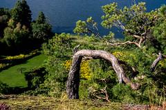 201509_ReisZweden_DSC_7152.jpg (KeesWoestenenk) Tags: natuur reis boom jaar zweden 2015 plaats tullinge gebeurtenis 2015zweden