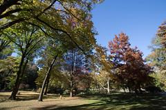 Central Park NYC (p.junior_adalberto) Tags: park nyc newyork wonderful nice peace centralpark peaceful beuatiful