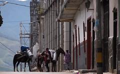 Arriero (Ivan Mauricio Agudelo Velasquez) Tags: caballo milk urbano cantina leche alle mula campesino arriero