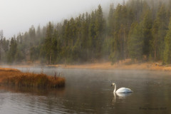 Serenity (Happy Photographer) Tags: autumn fall fog river swan october tranquility serenity yellowstonenationalpark wyoming ynp fireholeriver amyhudechek
