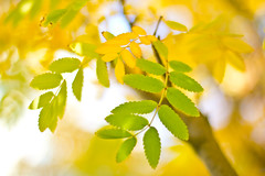 Simple Colors Of Nature (johnshlau) Tags: cruise autumn usa green nature colors leaves yellow alaska autumnleaves autumncolors skagway alaskacruise simplecolors simplecolorsofnature
