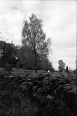 Rester af gammelt svensk agerbrug II (holtelars) Tags: spotmatic spotmaticf smc takumar smctakumar 28mm f35 film analog ilford ilfordfp4 125iso d76 bw jobo atl1500 autolab monochrome filmphotography filmforever blackandwhite outdoor sverige sweden woods trees birch rockfence larsholte homeprocessing asahi fp4 pentax