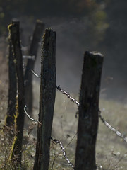 Le piquet qui fume **--- ° (Titole) Tags: fence titole nicolefaton barbedwire posts mist thechallengefactory