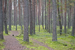 The middle of nowhere (sim.garfunkel) Tags: aukstaitija national park lithuania baltic state middle nowhere forest tree nature path nikon d3200 noediting