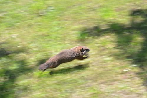 Run, run, run!!