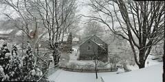 Winter in Wynnewood © Stephen Latona