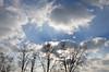 """Ciel de janvier (Brigitte .. . """"Tatie Clic"""") Tags: 2017010518 hiver janvier ciel nuages arbres contreplongée bleu paysage lotetgaronne aquitaine francesudouest sansretouche"""