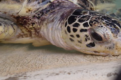 DSC_0806 (RiNA-87) Tags: turtle