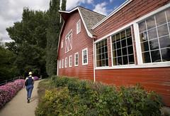 barn, berries (Trevor Pritchard) Tags: berrybarn saskatoon saskatchewan ella august barn rural prairies canada 2014