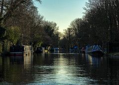 Grand Union Canal, Cowley (CJPhotography UK) Tags: nature natur natural urban urbanwildlife urbannature river landscape canal water boat boats houseboat trees tree green blue sky yellow outdoors sun sunlight light lighting shadow shade reflection lines linear uk london grandunioncanal