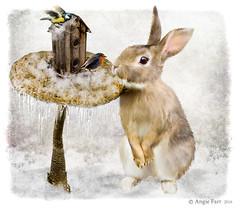 Winter Friends (rubyblossom.) Tags: photocontest week 606 toadstool bird house snow rabbit birds robin rubyblossom rubystreasures 2017