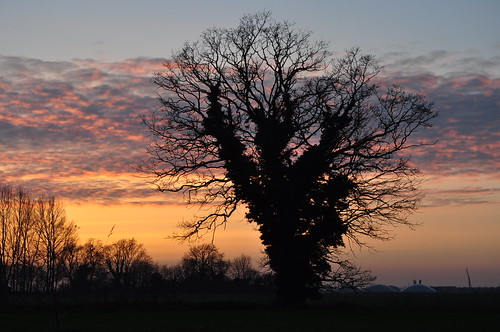 Tree silhouetttes after sunset