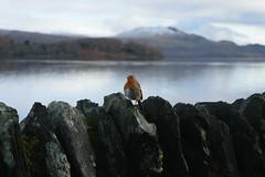 Edingburgh_2016-5393.jpg (René Groothedde) Tags: luss scotland verenigdkoninkrijk gb