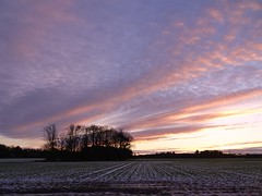 Sunset near S Alloa (cocopie) Tags: sunset trees sky clouds scotland