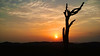 Mandatory sunset silhouette shot (Kailas.Shastry) Tags: sunset silhouette lonetree