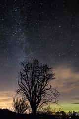 Hogmanay Aurora (amcgdesigns) Tags: andrewmcgavin aurora tree milkyway night nighttime stars merrydancers northernlights eos7dmk2 canon1022mm rafford forres sky dark darkness