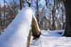 Eis/Schnee - Photo Challenge 01 (hobbyshoot) Tags: photochallenge schnee winter baum