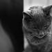 Twilight (SopheNic (DavidSenaPhoto)) Tags: fujinon35mmf14 monochrome old twilight fuji cat 17 blackandwhite bw xe1