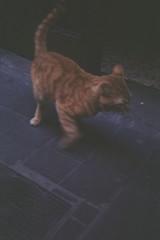 Primer Carrete Revelado. Werlisa Club Color (Sr_Bertog) Tags: madrid calle gato huir werlisaclubcolor werlisa