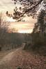 Faggeta (GiuliaNatalini) Tags: nature italy wood sunset me photo viterbo mountain leaves canon italia natura january winter