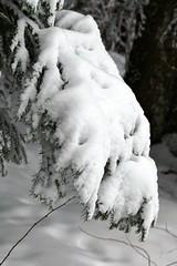 Winterwald (Martinus VI) Tags: grosshöchstetten möschberg winter winterlandschaft hiver schnee nieve snow neige kanton de canton bern berne berna berner bernese schweiz suisse svizzera suiza switzerland y150222 martinus6 martinusvi