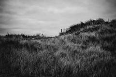 Dunes de Biville (The Black Fury) Tags: seascape dunes beach sand sigma 1770mm f284 dc os hsm contemporary canon 700d normandie france blackandwhite monochrome noiretblanc bw nature