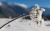 Ombelle de jour... (J&S.) Tags: france hautesavoie morillon giffre valléedugiffre ombelle givre glace hiver neige froid nature