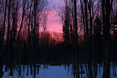 February Sunrise (view2share) Tags: february192017 february2017 february 2017 deansauvola upperpeninsula uppermichigan northernmichigan michigan mi reserve woods wood northwoods northwood houghtoncounty forest snow snowfall snowmobile winter cold tacoma toyotatacoma 2013tacoma 2013toyotatacoma trip hardwood maple sunrise sun morning dawn
