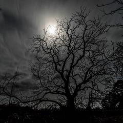 Moonlight (amcgdesigns) Tags: rafford scotland unitedkingdom gb clouds lowlight moon night sky trees moonlight dark darkness nighttime cloudsstormssunsetssunrises square squarecrop eos7dmk2 canon1022mm