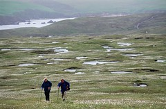Hermaness-10.jpg (MyParkScotland) Tags: walk unst shetland recreation people peat nnr lochan hiresjpegs hermaness10jpg hermaness cotton coast bog blanket access