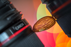 """Macro Monday - The Space """"In Between"""" (m_hamad) Tags: macromondays thespaceinbetween space between walnut canonllens llens red bokeh nature naturebeauty greatnature explore nationalgeographic dazzlingshot wildlife beauty canon usa 7dmkii blinkagain ultimateshot supershot"""
